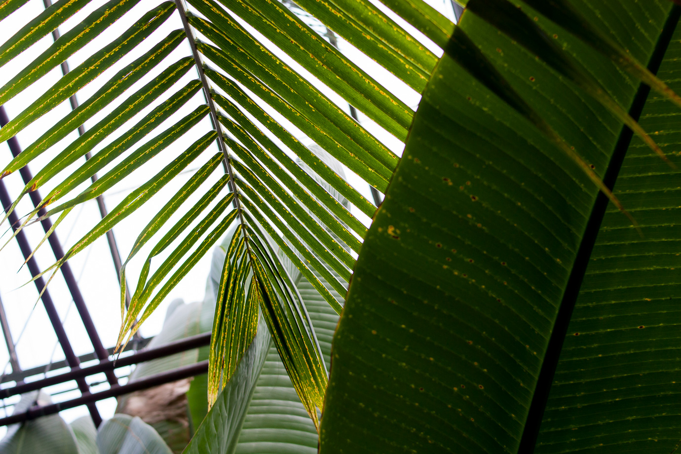 Palm leaves at the Conservatory